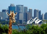 About 2.7 million tourists come to visit Australia annually: many of them visit Sydney and its suburbs. There is much to see and enjoy in the suburbs of Sydney.