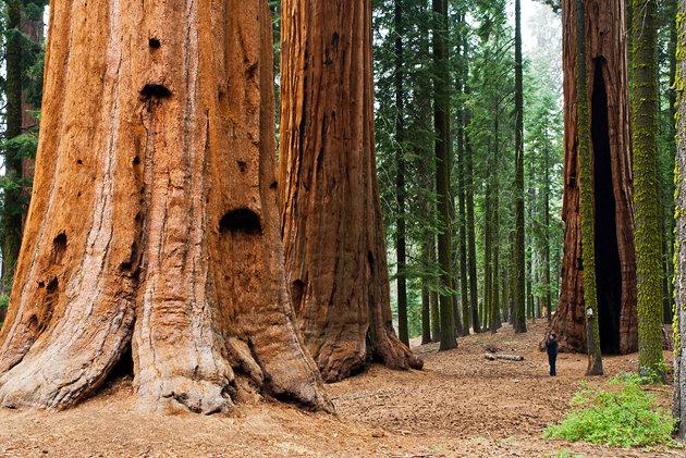 Californiasequoianationalpark Elite Club Ltd - National parks california
