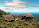 If you want to find a place that overflows with wildlife, you should visit the Galapagos Islands. The Galapagos change your vision about the world.