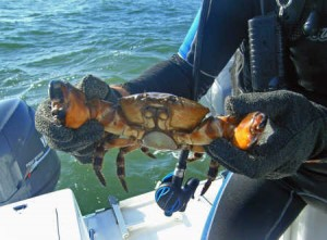 fishing-for-stone-crabs