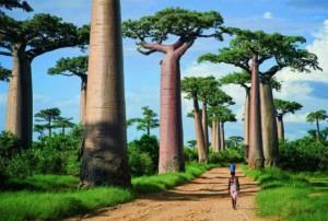 hohmodrom_baobab