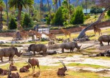 San Diego Zoo was founded 90 years ago and has an excellent reputation in the sphere of animal care. This is one of the most beloved tourist attractions.