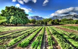 Organic-Farm-e1414374109628