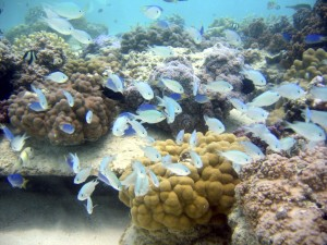 14-borapearl-diving_coral_garden2