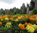 wpid-kamennyy-les-v-provincii-yun-nan_i_9