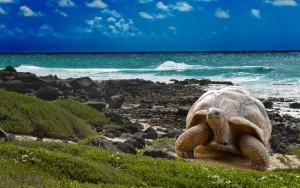 Turtle-beaches-ocean_1920x1200